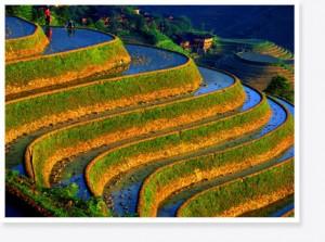 Rijsvelden op Bali