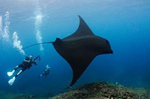 Duiken met Manta Rays op Bali