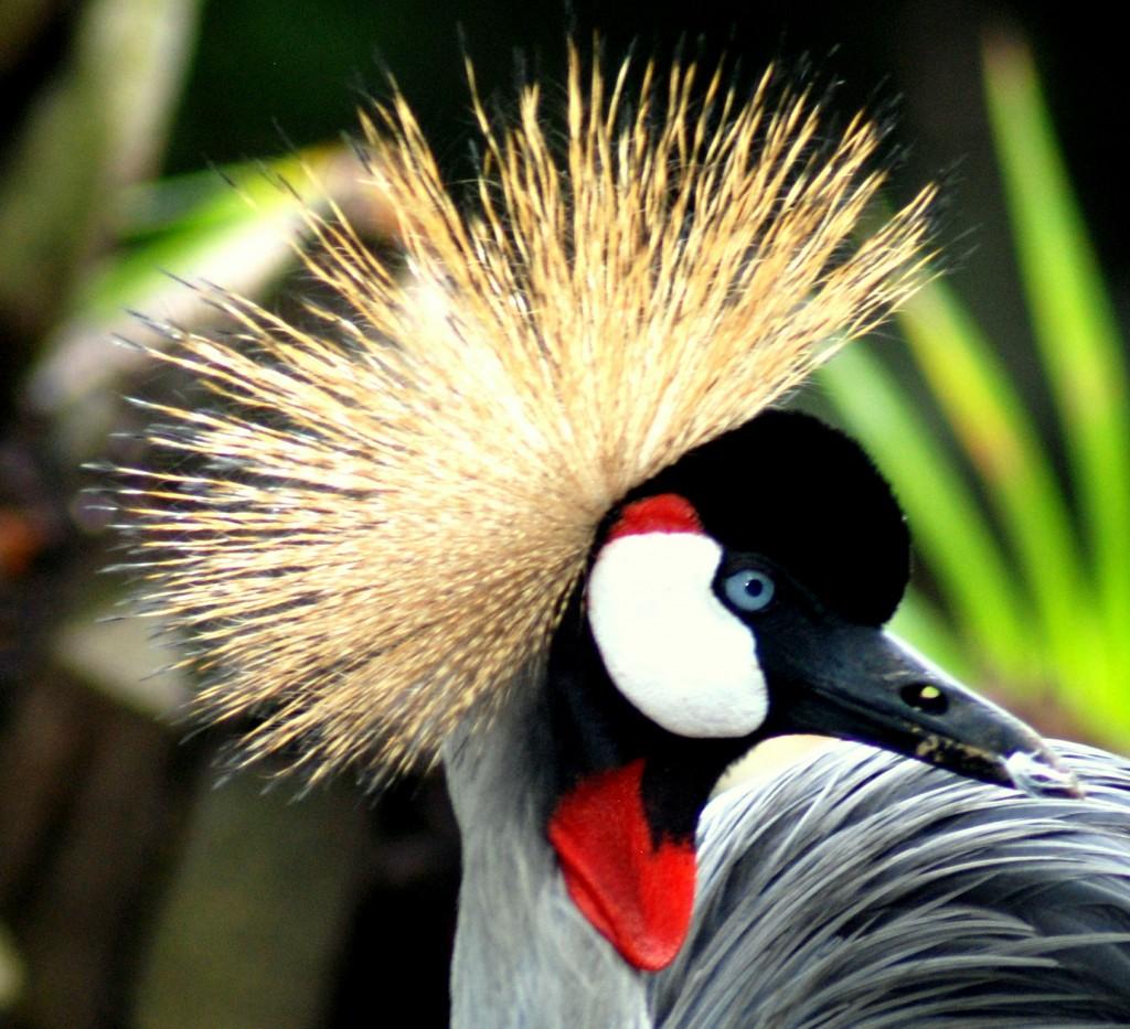 Vogels Observeren Bali Info Bali