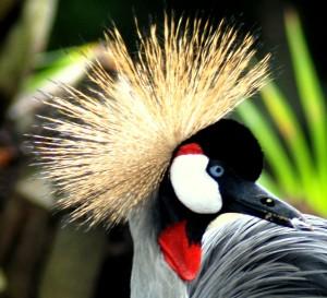 Vogels Bali